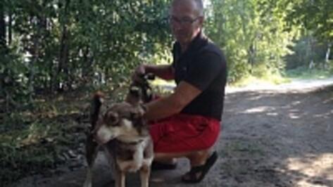 Воронежский зоозащитник передумал брать в Москву слепого щенка