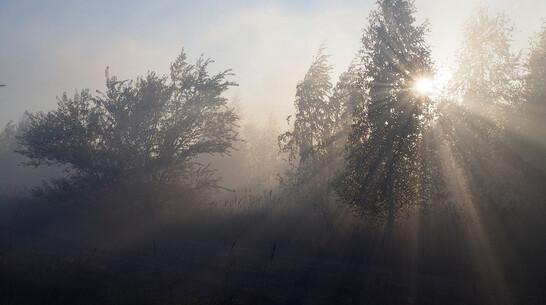 Дым от горящей 3 суток травы окутал район Воронежской области