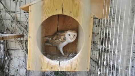 Зал птиц в Воронежском зоопарке откроется 28 июля