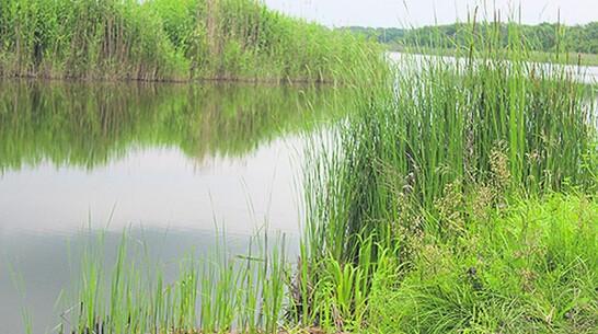 Во время отдыха с семьей на пруду в таловском поселке Терехово утонула 41-летняя женщина