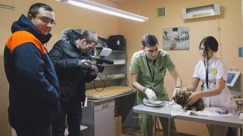 Воронежские ветеринары поборются за жизнь спасенной из-под завалов кошки