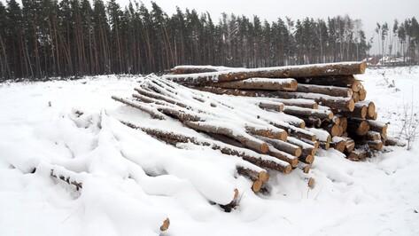 «Увозят наш лес». Как общественники боролись против вырубки сосен под Воронежем