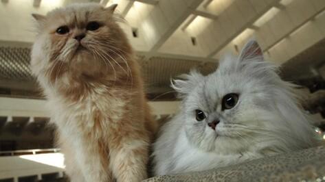 В Хохольском районе домашним собакам и кошкам сделают бесплатные прививки от бешенства