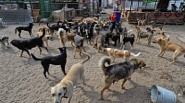 В воронежском приюте неизвестные отравили собак