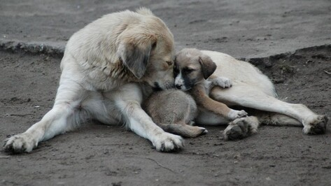 Воронежские власти рассмотрят три места для строительства собачьего приюта