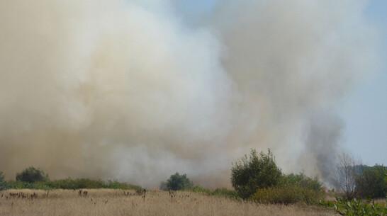 Спасатели ликвидировали последний крупный природный пожар в Воронежской области