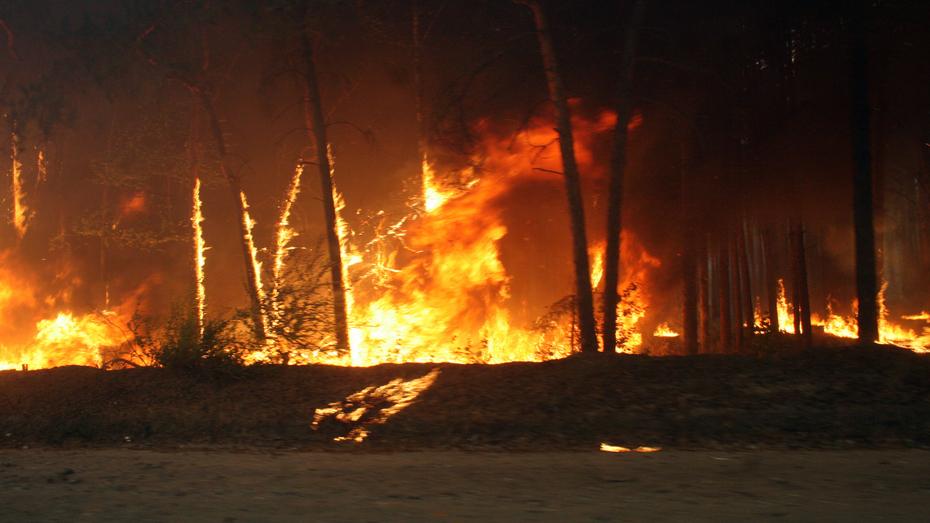 В Воронежской области из-за пала травы за сутки произошло 138 ландшафтных пожаров
