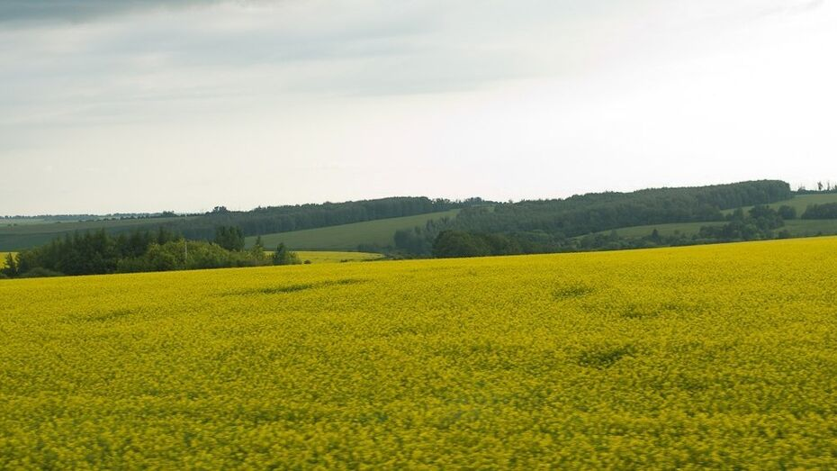 Воронежская область оформила более 100 тыс га бесхозных земель в 2014 году