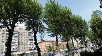 Общественники попросили мэра Воронежа защитить деревья во время благоустройства
