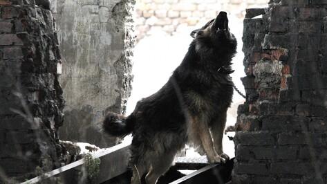 В 2 районах Воронежской области ввели карантин по бешенству животных