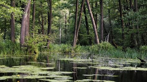 На заболоченных участках воронежской экотропы построят настилы к ноябрю