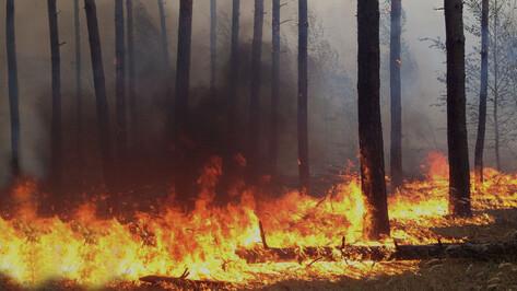 В Лисках сгорело около 9 га леса у лыжероллерной трассы