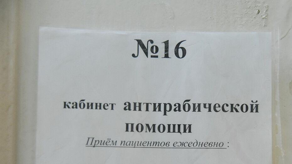 Более 20 случаев бешенства животных зафиксировали в Воронежской области