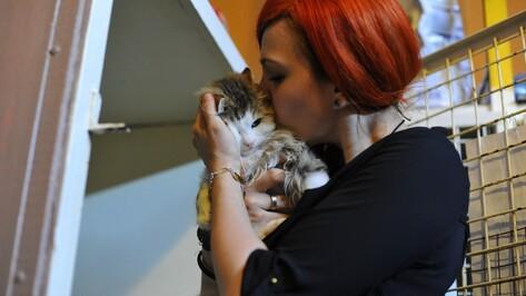 «Нет большего счастья». Зачем немецкая девушка решила приютить хромую кошку из Воронежа