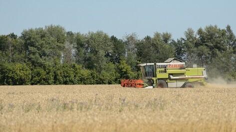 Воронежские хлеборобы намолотили 3 млн тонн зерновых