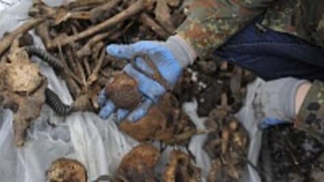 Волгоградские поисковики нашли останки бойца из Воронежской области