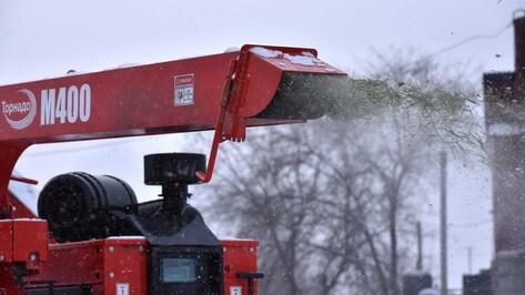 В Воронеже новогодние елки разобьют в щепки