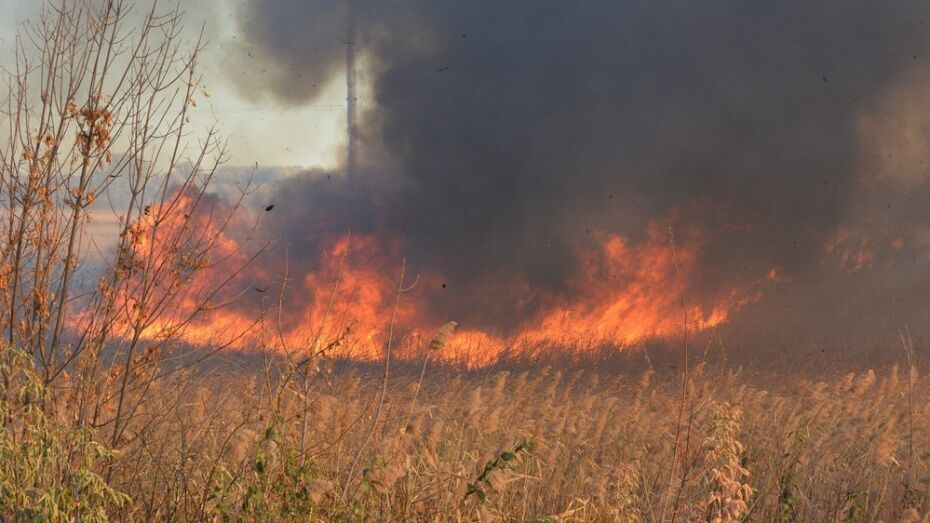 В Рамонском районе на площади 1 тыс кв. м выгорела сухая трава
