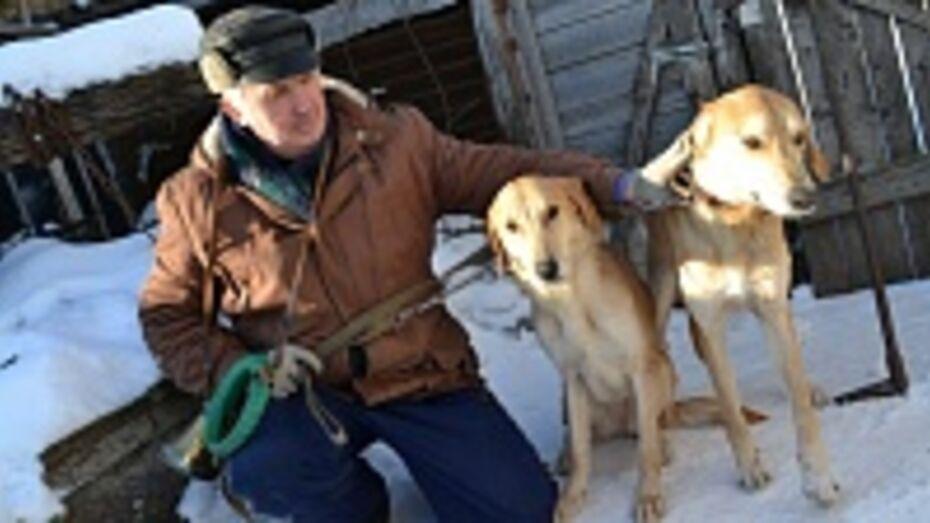 Грибановские охотники заняли первое место в межрегиональных состязаниях по охоте с русскими гончими