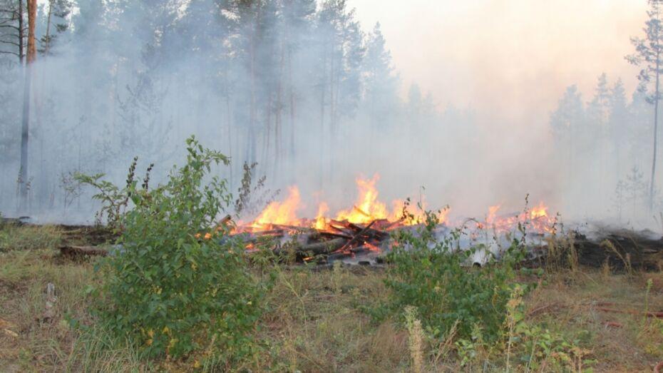 В Воронежской области в 2,4 раза выросла площадь ландшафтных пожаров