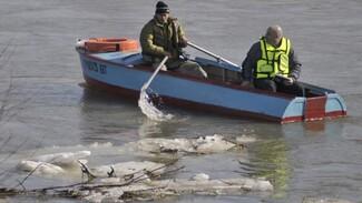 В Воронежской области снизилось число затопленных территорий