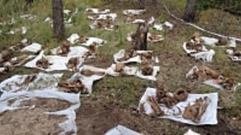 Аннинский студент на летних каникулах помогал поисковикам извлекать из земли останки жертв репрессий
