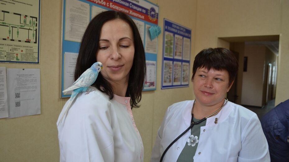 Говорящий волнистый попугай стал помогать павловским ветеринарам вести прием