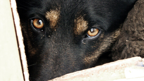 В Воронеже во дворе многоэтажки отравленные догхантерами собаки бились в конвульсиях на глазах детей и беременной женщины