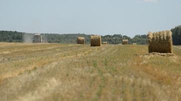 Воронежская область внесла лепту в рост показателей отечественного агропрома