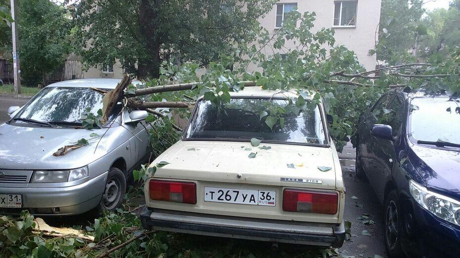 В Воронеже на улице Богдана Хмельницкого дерево упало на 3 машины