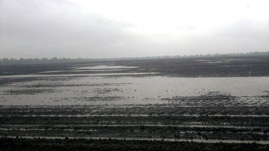 В Поворинском районе посевная встала из-за дождей