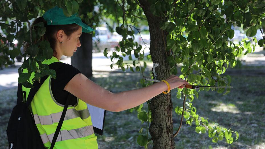 В Воронеже вырубят 3,2 тыс аварийных деревьев