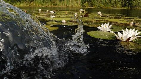 Экологи пригласили воронежцев на конкурс фотографий «водных сокровищ»
