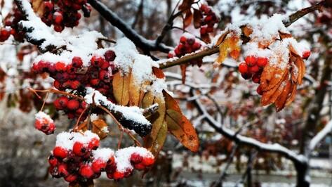 Потепление придет в Воронеж на выходных