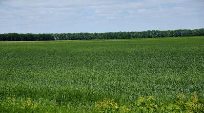 Воронежские аграрии засеяли 103% от плана озимых