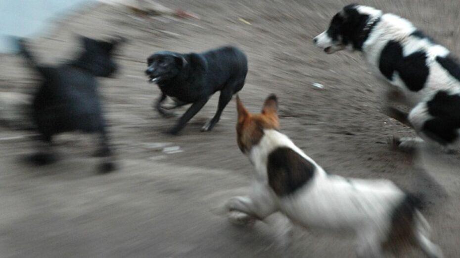 В Верхнемамонском районе собаки стали кусаться в пять раз чаще