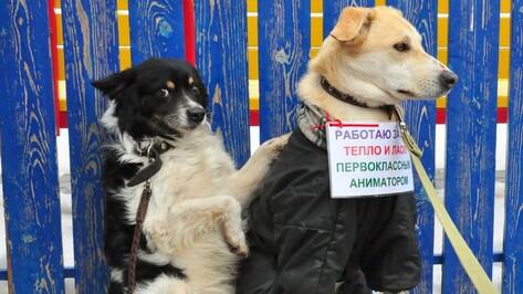 Воронежцы пожертвовали бездомным животным 23 тыс рублей
