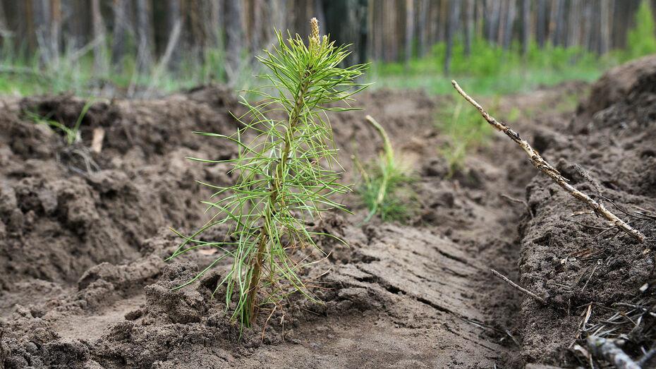 Акция «Сохраним лес» стартовала в Воронежской области с высадки 880 сосен