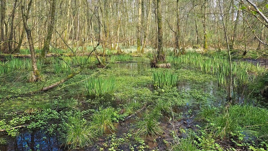 В лесу на границе с Воронежской областью нашли следы пропавшего 3-летнего ребенка