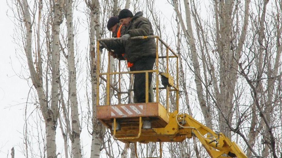 В Кантемировке обрезали деревья, угрожающие безопасности  воспитанников детского сада