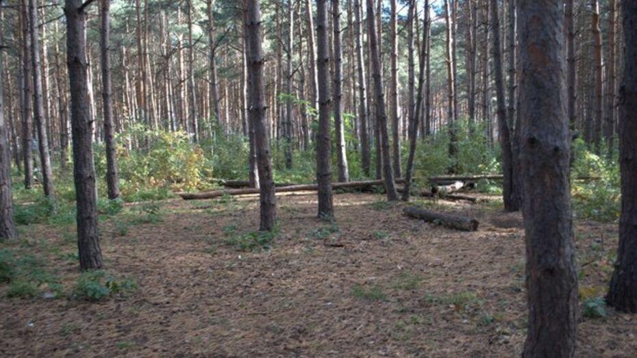 Северный лес в Коминтерновском районе строители не тронут