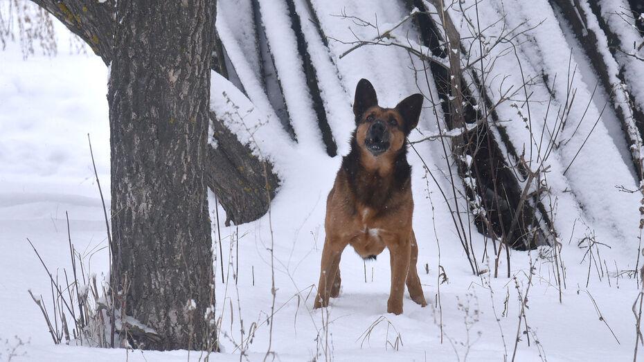 Прокуратура взяла на контроль проверку собачьих боев под Воронежем