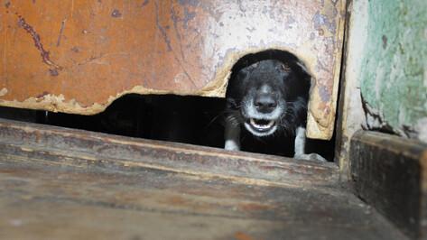 Воронежская область вошла в число лидеров в РФ по частоте выявления бешенства у животных