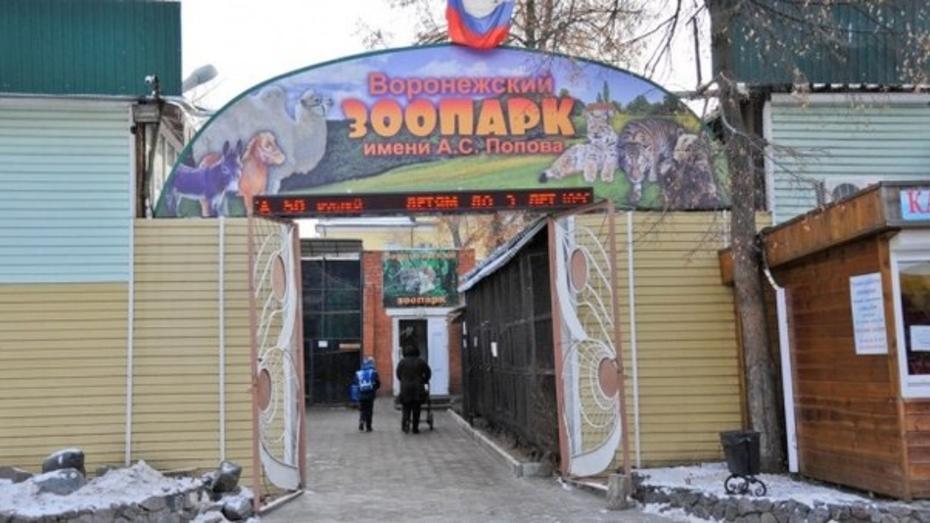 Воронежский зоопарк отменил новогодние каникулы