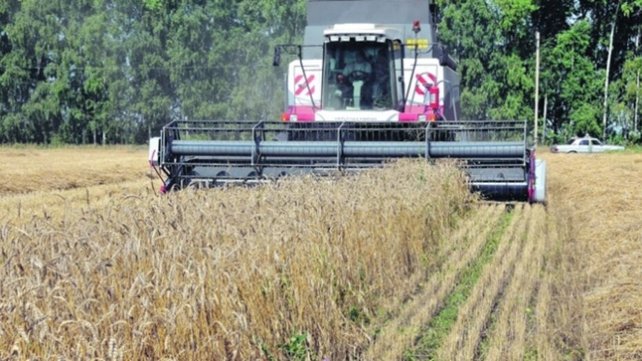 Инвестиции в сельское хозяйство Воронежской области за год выросли почти в два раза