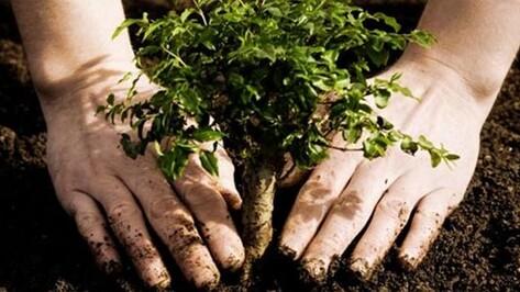 В Бутурлиновском районе высадили семь тысяч двухлетних дубов
