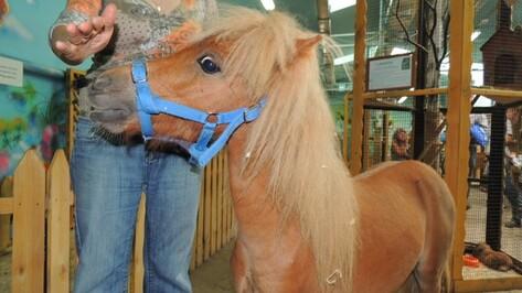 В Воронежском зоопарке появилась «лечебная» лошадка