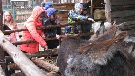 Воронежский зоопарк предложил посетителям поделиться овощами с животными
