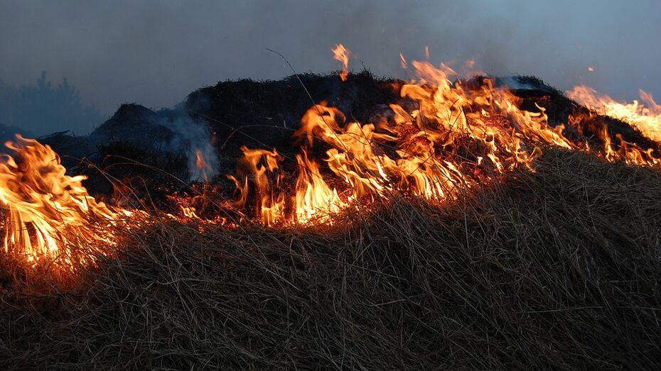 В Воронежской области зафиксировали 13 лесных пожаров с начала 2017 года