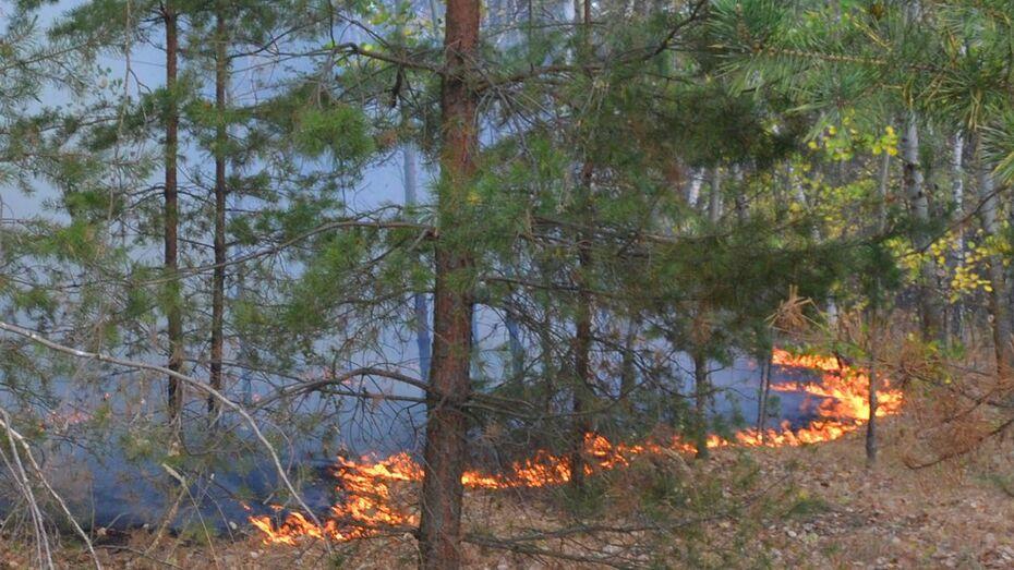 В Лискинском районе загорелся лес площадью 30 га